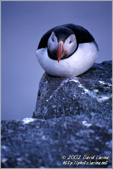 Puffin - Best of 2002, Norway