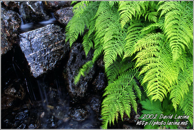 Fern By Stream - Best of 2002, Norway