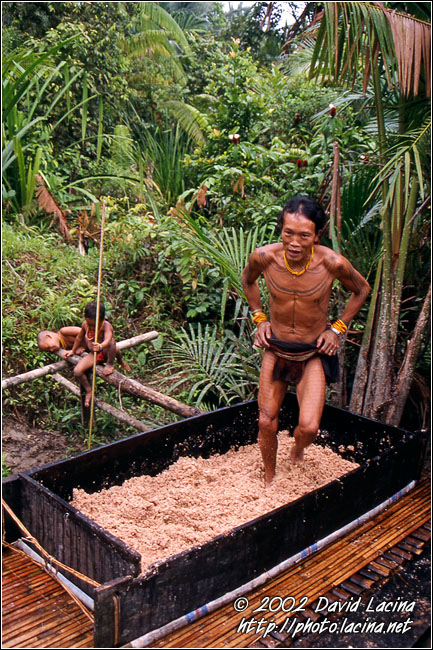 Processing Of Sago - Siberut island, Indonesia