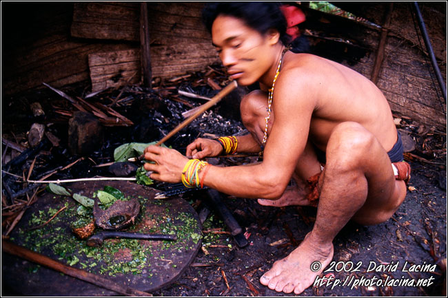 Preparing The Poisonous Arrows - Siberut island, Indonesia