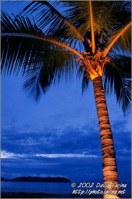 Lighted Palm Tree - Langkawi, Malaysia