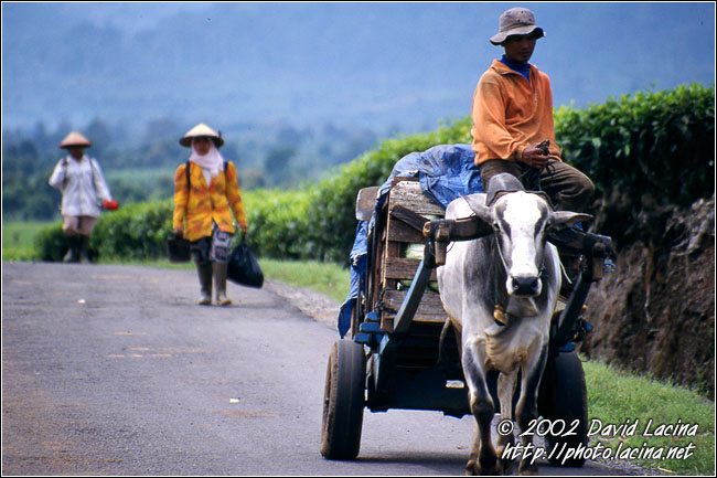 Comming Back From Field - Kerinci, Indonesia
