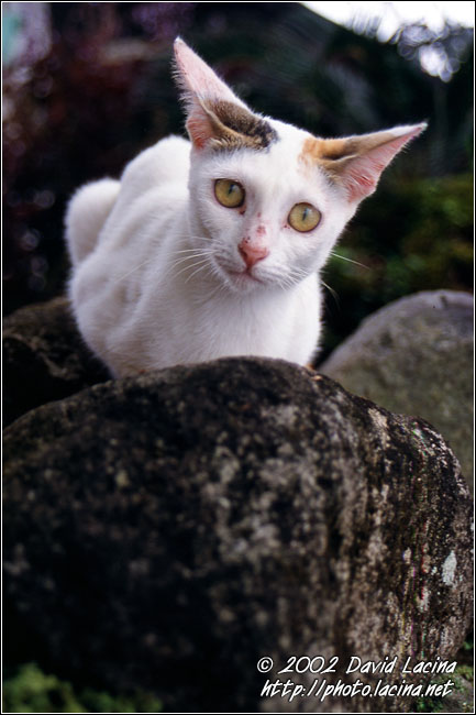 The Cat - Kerinci, Indonesia