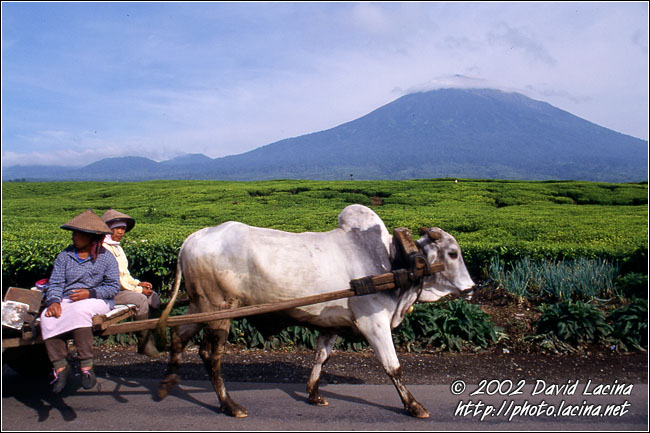 Local Means Of Transport - Kerinci, Indonesia