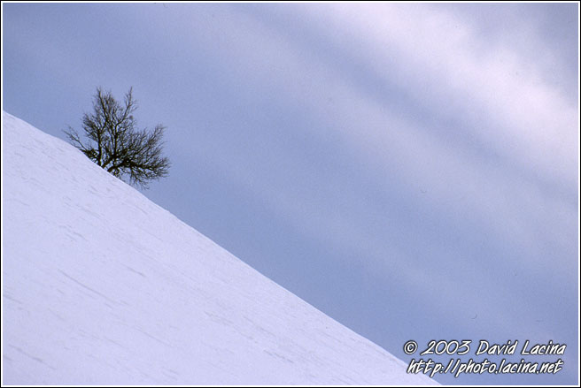 Skiing Tree - Best of 2003, Norway