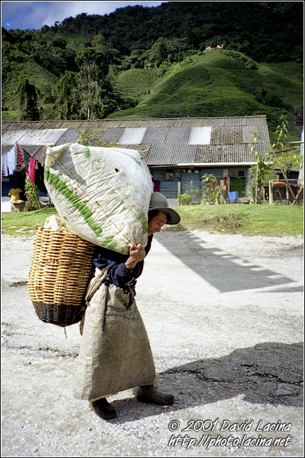 Plantation Worker - Cameron Highlands, Malaysia