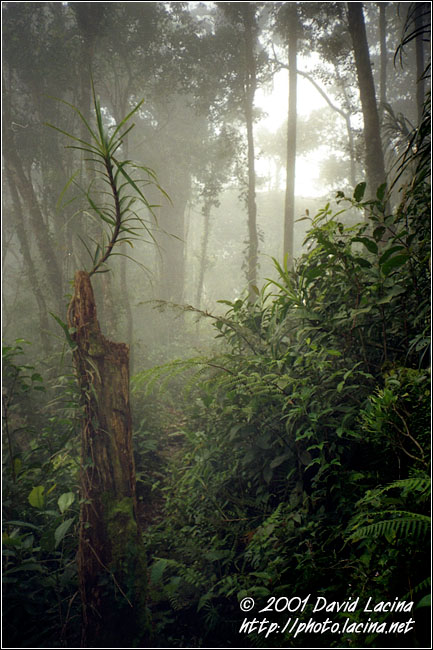 Jungle In Cameron Highlands - Cameron Highlands, Malaysia