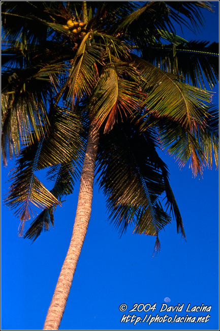Palm Tree And Moon - Brenu beach, Ghana