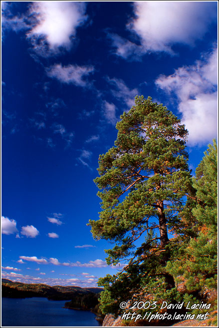 Pine By Goksjoa - Best of 2003, Norway