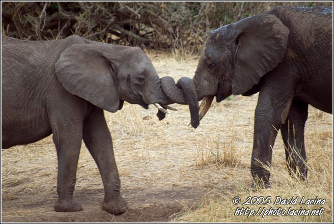 Love You! - Tarangire NP, Tanzania