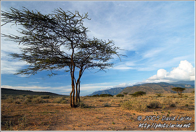 Still Alive? - The Suguta Valley-Nature, Kenya