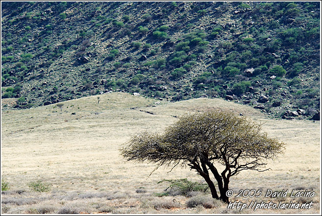 Tree By A Mountain - The Suguta Valley-Nature, Kenya