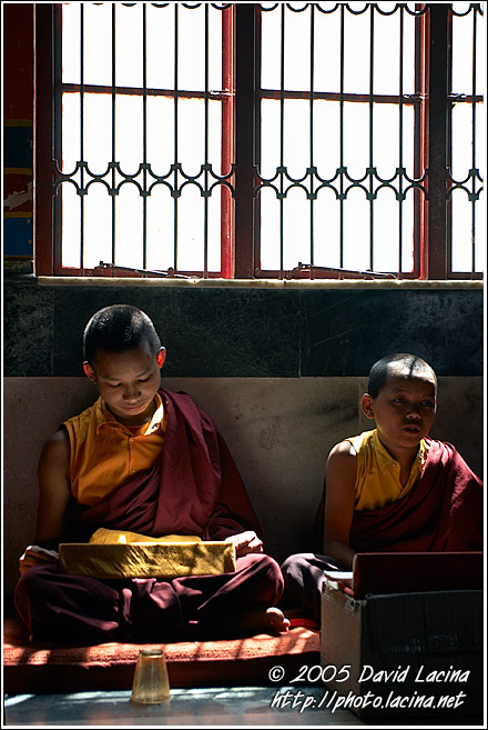 Monks Under Window - Golden Temple, Namdroling Monastery, India