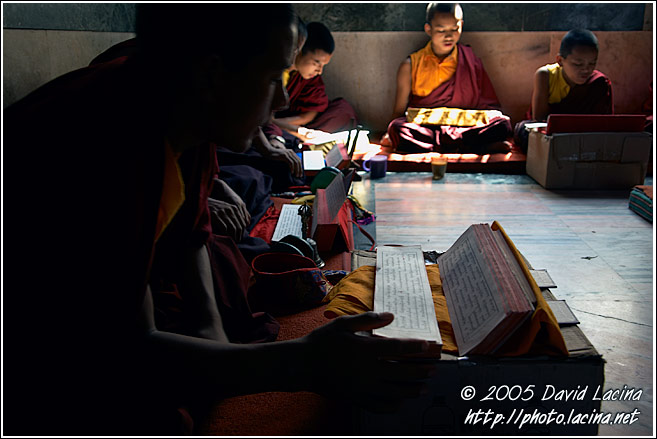 Monks In Prayer - Golden Temple, Namdroling Monastery, India