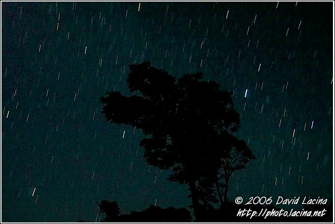 Tree And Startrails - Kodagu (Coorg) Hills, India