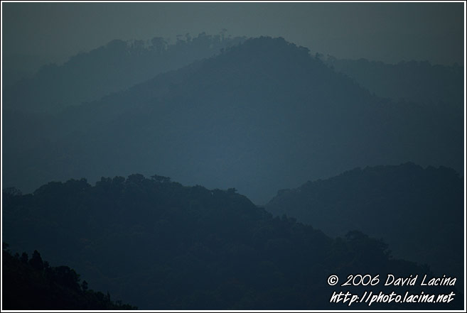 Morning Mist Over Coorg Jungle - Kodagu (Coorg) Hills, India
