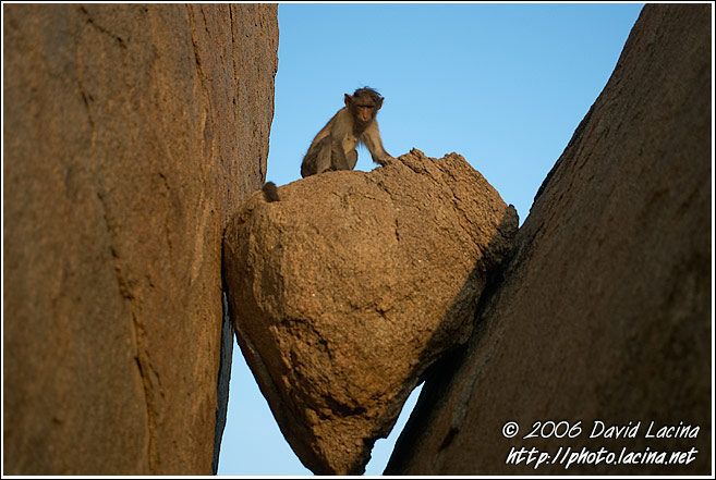 Monkey On A Stone - Hampi - Nature, India