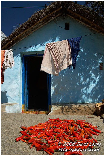Drying Chilli - Hampi - Nature, India