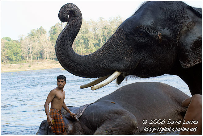 Elephant And Man - Elephant Training Center, India