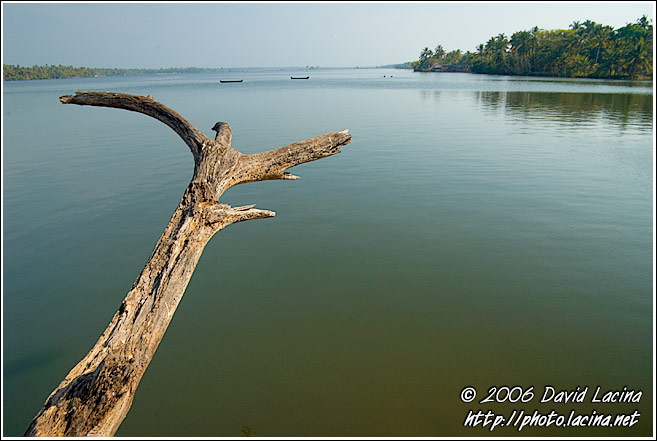 Tree And Sea - Cochin (Kochi), India