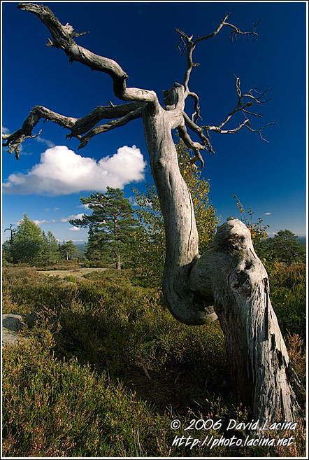 Tree And A Cloud - Best of 2006, Norway