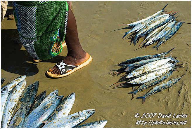 Selling Fish - People And Nature, Sierra Leone