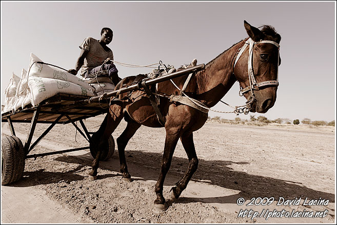 Transporting Salt - Salt Harvesting, Senegal