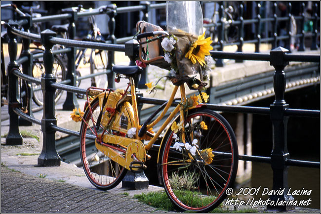 Bike On Bridge - Best Of Netherlands, Netherlands