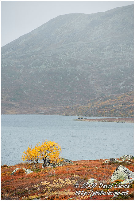 Birch By Vavatn - Autumn In Hemsedal, Norway