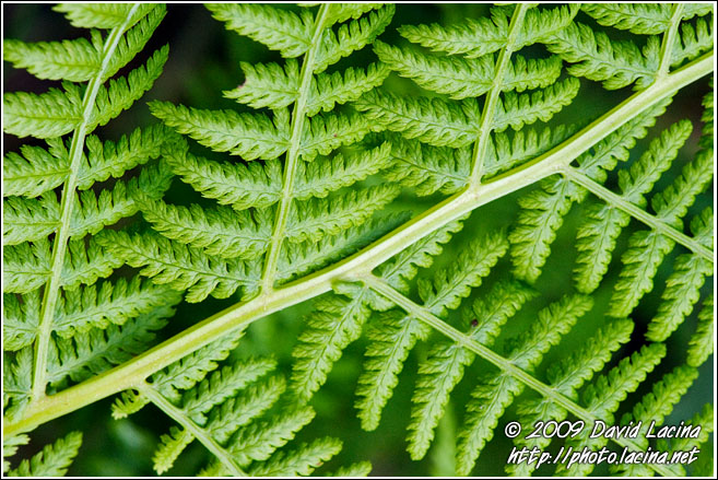 Fern Abstraction - Best Of 2009, Norway