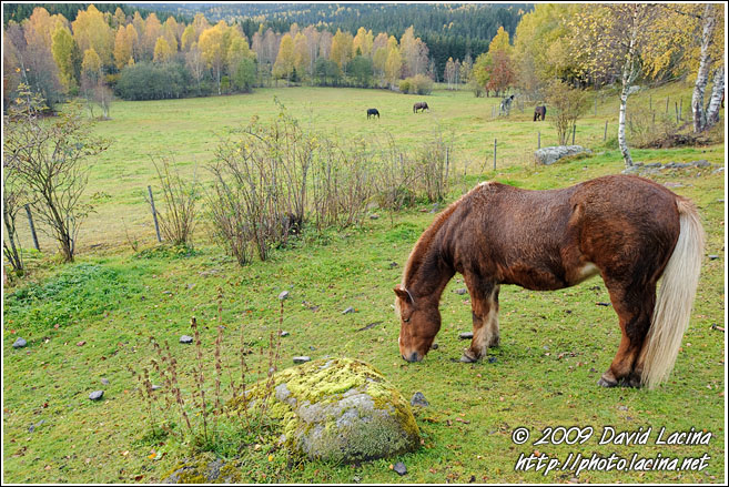Horse By Bogstad - Best Of 2009, Norway