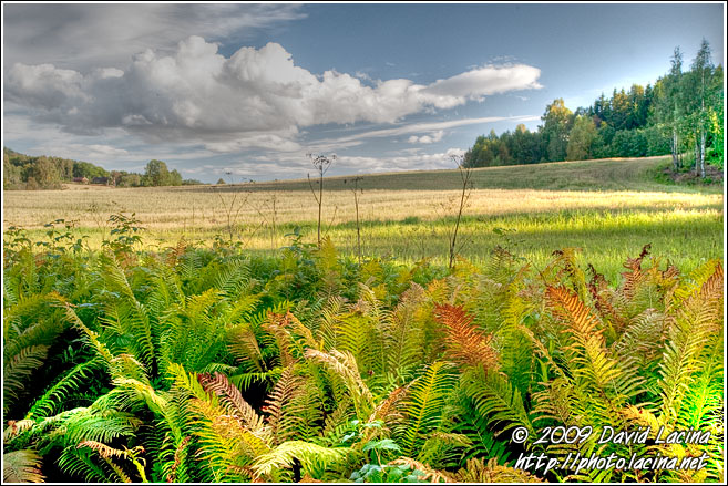 Ferns By Bogstad - Best Of 2009, Norway