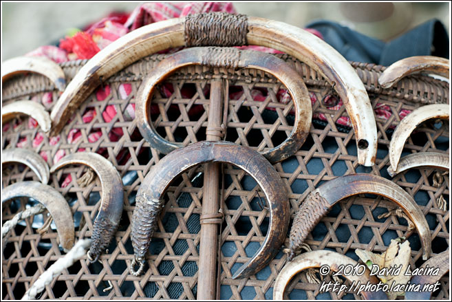 Wild Boar Tusk Decoration - Nagaland, India