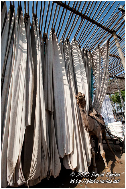Drying Clothes - Jaipur fabric factory, India