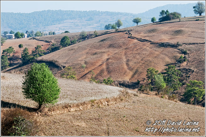 Tree And Field - Kalaw Trekking, Myanmar (Burma)