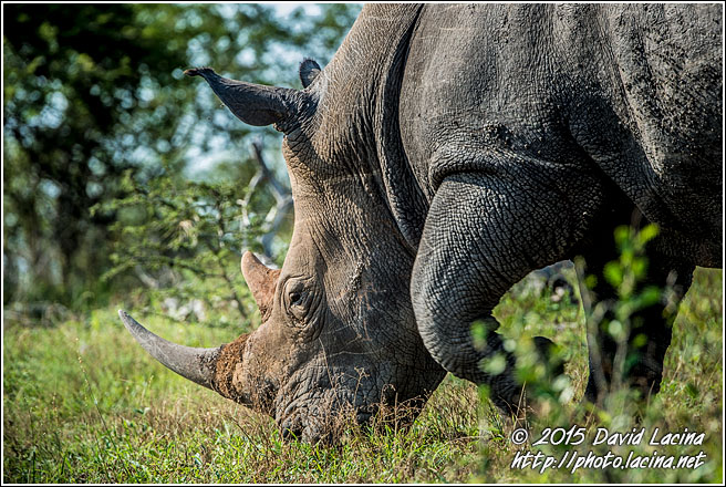White Rhinoceros - Best Of SA, South Africa