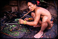 Preparing The Poisonous Arrows, Siberut island, Indonesia