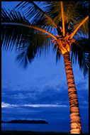 Lighted Palm Tree, Langkawi, Malaysia