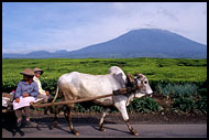 Local Means Of Transport, Kerinci, Indonesia