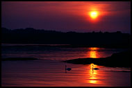Swan In Sunset, Best of 2003, Norway