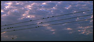 Wires, Birds And Clouds, Panoramas, Ghana