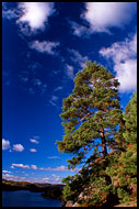Pine By Goksjoa, Best of 2003, Norway