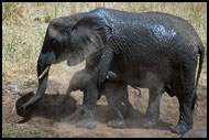 Lets Take A Dust Shower, Tarangire NP, Tanzania