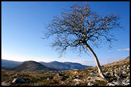 Lonely Tree, Best of 2001, Norway
