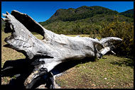Old Tree Resting, Nature Of Usambara Mountains, Tanzania