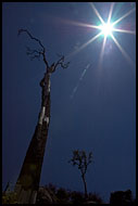 Old Tree Trying To Touch The Sun, Nature Of Usambara Mountains, Tanzania