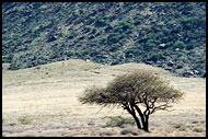 Tree By A Mountain, The Suguta Valley-Nature, Kenya