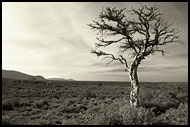 Black And White Dreams, The Suguta Valley-Nature, Kenya