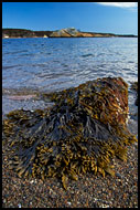 Bergekilen And Brown Algae, Best of 2005, Norway