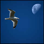 Seagull And Moon, Best of 2005, Norway